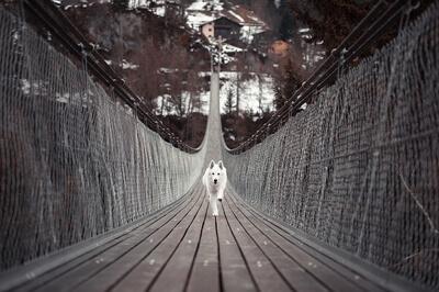 Hunden gennem tiden