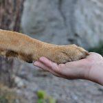 Hundens historie – Fra forfædre til i dag
