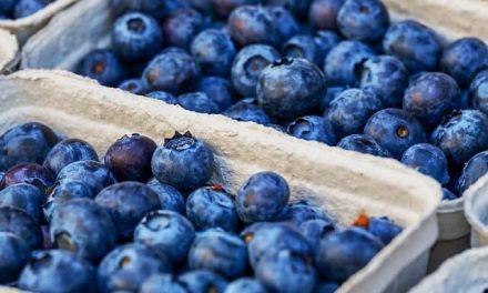 Må hunde spise blåbær?