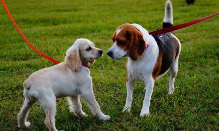 Vis hensyn, når du møder andre hunde på din vej