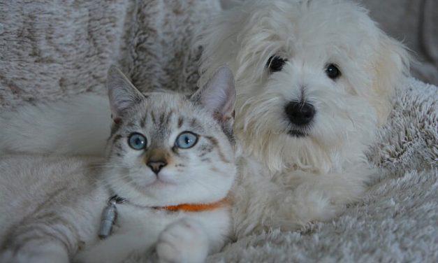 Allergi hos hunde – Fakta og råd