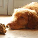 Dårlig mave hos hunde – Hvad gør du?