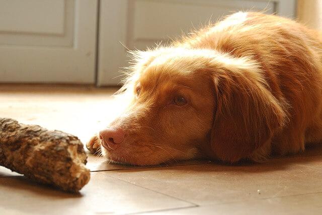 Dårlig mave hos hund