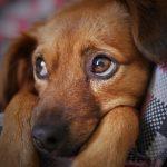 Dårlige vaner hos hunden – Dårlige løsninger