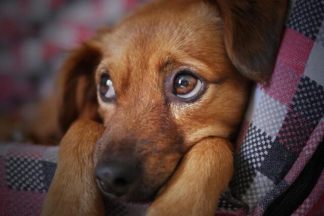 Dårlige vaner hos hunden