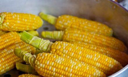 Må hunde spise majs?