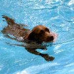 Afkøl din hund i sommervarmen – 7 gode råd