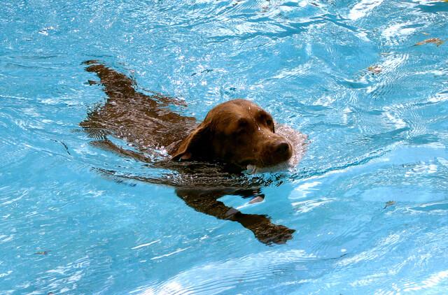 Hund der bader