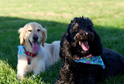 2 hunde på en varm dag