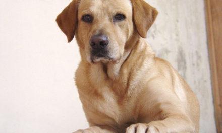 Slidgigt hos hunde – Årsag og behandling