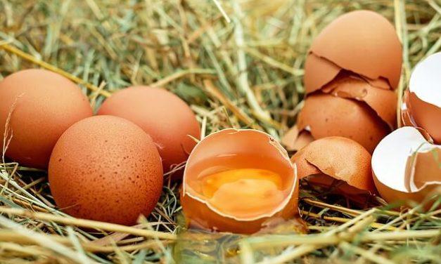 Må hunde spise æg?